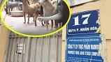 Trại nuôi chó mọc giữa khu dân cư, bức tử người dân Hà Nội