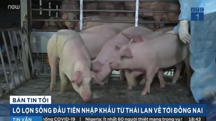 Vì sao dịch tả lợn Châu Phi bùng phát khó kiểm soát
